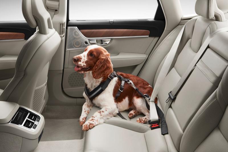 Hunde-Sicherheitsgurt, Größe S